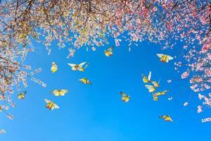fleurs de cerisier roses avec des papillons dans le ciel
