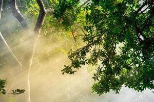 la lumière du soleil de fin d'été perce les arbres photo