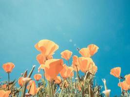 champ de pavot et fleurs sauvages au soleil sous un ciel bleu photo