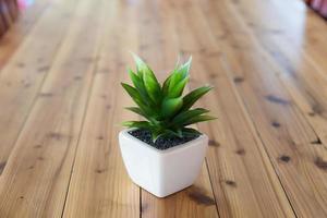 plante en pot blanc photo