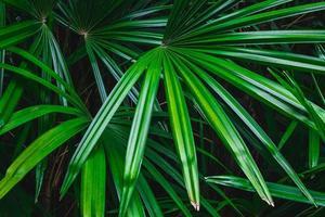 feuille de palmier dans une forêt photo