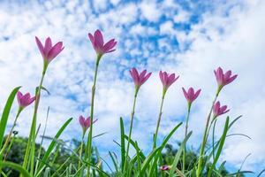 fleurs roses dans le ciel photo