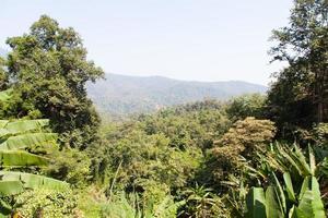 forêt dans les montagnes photo