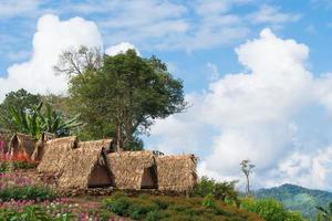 chalets et champ de fleurs en Thaïlande rurale photo