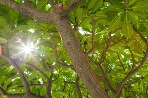 la lumière du soleil à travers les feuilles d'un arbre