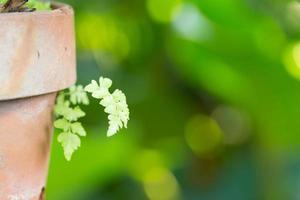 pot de fleur de fougère photo