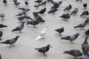 colombes dans la rue