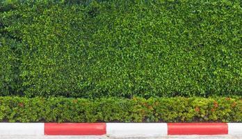 le long des buissons en bordure de route photo