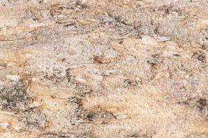 texture de l'écorce des arbres photo