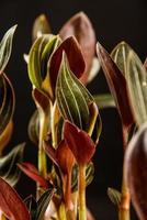 feuilles sur fond noir photo