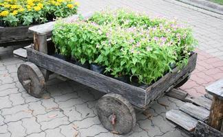 fleurs violettes dans un wagon photo