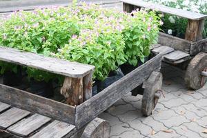fleurs lilas dans un wagon photo