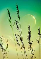 lune et fond de hautes herbes