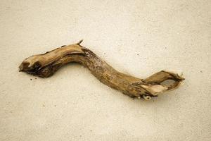 bâton de bois flotté dans le sable