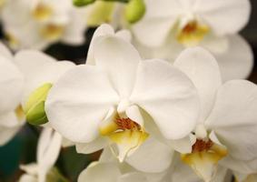 gros plan de fleur d'orchidée