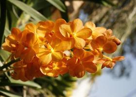 fleurs d'orchidées orange