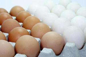 œufs bruns et blancs