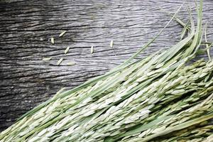 plante de riz sur bois photo
