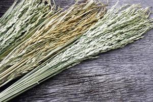 plante de riz séché sur bois photo