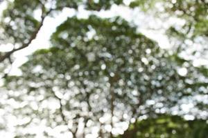 fond d'arbre bokeh flou