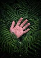 main dans les feuilles de fougère verte, esthétique de l'art contemporain photo