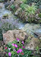 ruisseau et fleurs photo