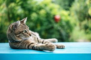 chat tigré sur surface bleue photo