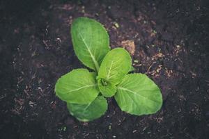 jeune pousse d'une plante dans le sol photo