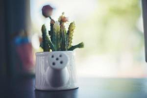 La vie encore des plantes en bois de cactus photo