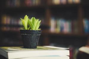 livres et cactus au café photo