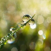 goutte de pluie sur un brin d'herbe