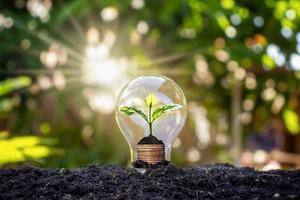 un arbre pousse dans les ampoules, les concepts d'économie d'énergie et d'environnement le jour de la terre photo