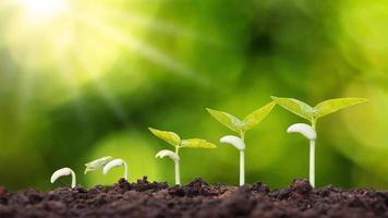 ordre de croissance des jeunes plantes, plantes ou jeunes arbres sur fond naturel photo
