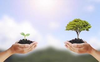 échange d'arbres entre les mains de l'homme, un concept de jour de la terre et de conservation de l'environnement