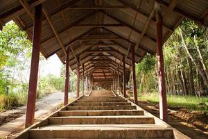 escaliers dans la forêt