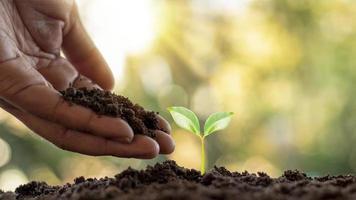 la plantation d'arbres et la plantation d'arbres, y compris la plantation d'arbres par les agriculteurs à la main, des idées de croissance des plantes