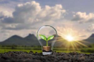 un arbre poussant sur une pièce de monnaie dans une ampoule, y compris un fond de coucher de soleil, des idées d'économie d'énergie et des idées d'énergie renouvelable