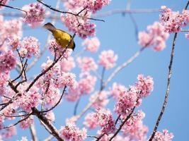 oiseau jaune et fleurs roses photo
