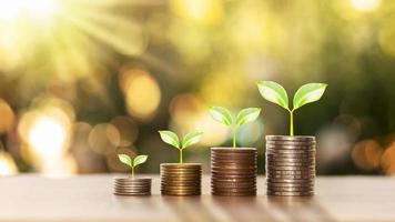 Concept de financement et d'investissement réussi avec des arbres qui poussent sur des pièces sur fond de nature verte floue photo