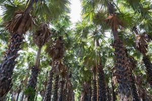 groupe de palmiers pendant la journée