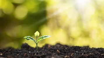 petits arbres qui poussent sur le sol dans la lumière du matin sur fond de nature floue. concept écologique