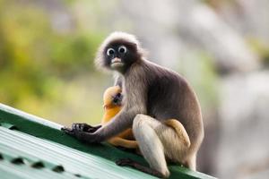 mère et bébé singes photo
