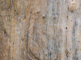 texture de tronc d'arbre photo