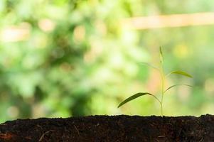 arbre en croissance sur fond naturel photo