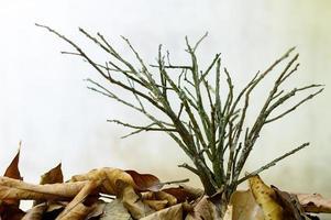 branches et feuilles sèches photo