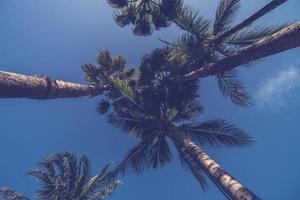 cocotiers tropicaux