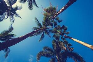 cocotiers tropicaux photo