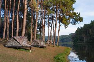 tentes de camping avec arbre près de l & # 39; eau photo
