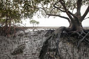 arbres de mangrove sous un ciel nuageux