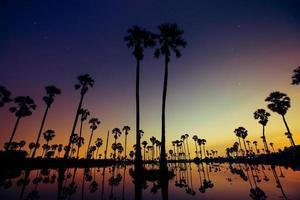 coucher de soleil avec des palmiers